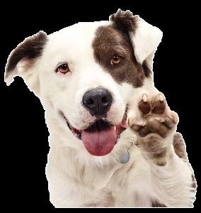 Hond zwaait | Dierenopvangtehuis de Bommelerwaard