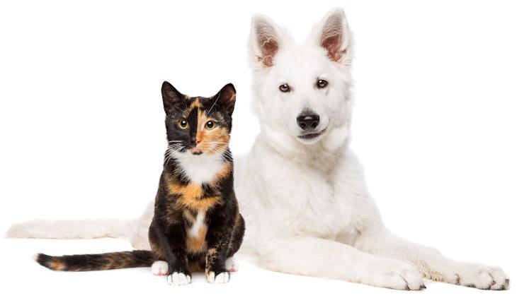 Kat en witte pup | Dierenopvangtehuis de Bommelerwaard