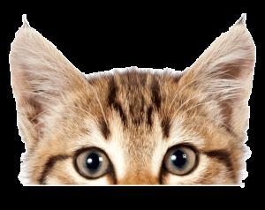 Kitten spieken | Dierenopvangtehuis de Bommelerwaard