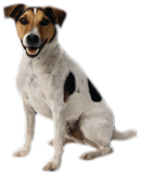 Hond zittend   Dierenopvangtehuis de Bommelerwaard