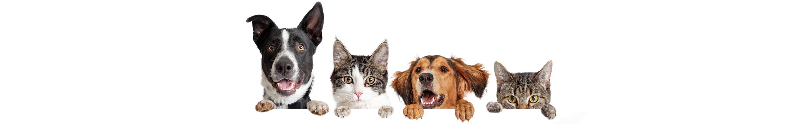 Hond en kat banner | Dierenopvangtehuis de Bommelerwaard
