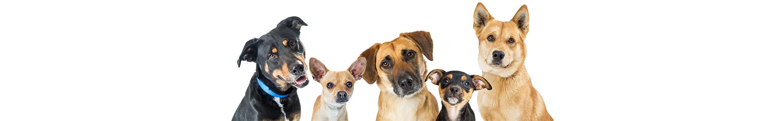 Banner Honden | Dierenopvangtehuis de Bommelerwaard