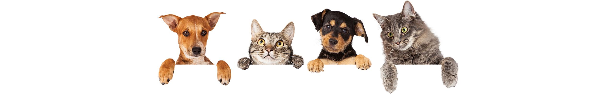 Banner Katten | Dierenopvangtehuis de Bommelerwaard