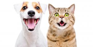 Blije hond en kat | Dierenopvangtehuis de Bommelerwaard