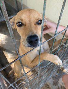 Buitenlandse hond | Dierenopvangtehuis de Bommelerwaard