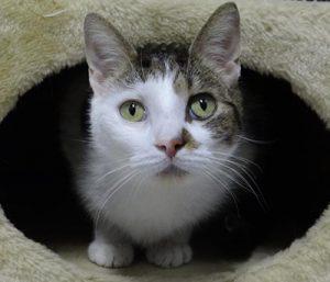 Katten | Dierenopvangtehuis de Bommelerwaard