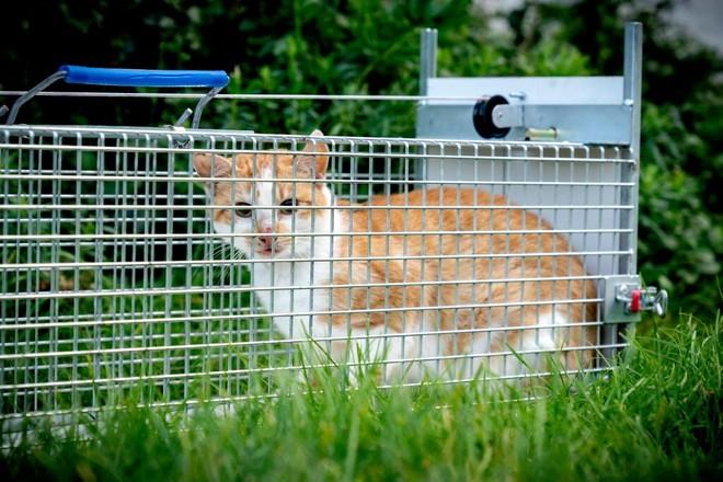 Gevangen kat | Dierenopvangtehuis de Bommelerwaard